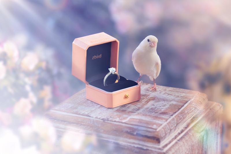 钻石小鸟天津体验中心五周年店庆 惊喜只为你倾心
