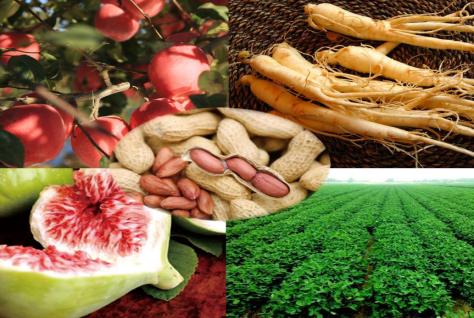 威海面向国内外征集农产品品牌LOGO